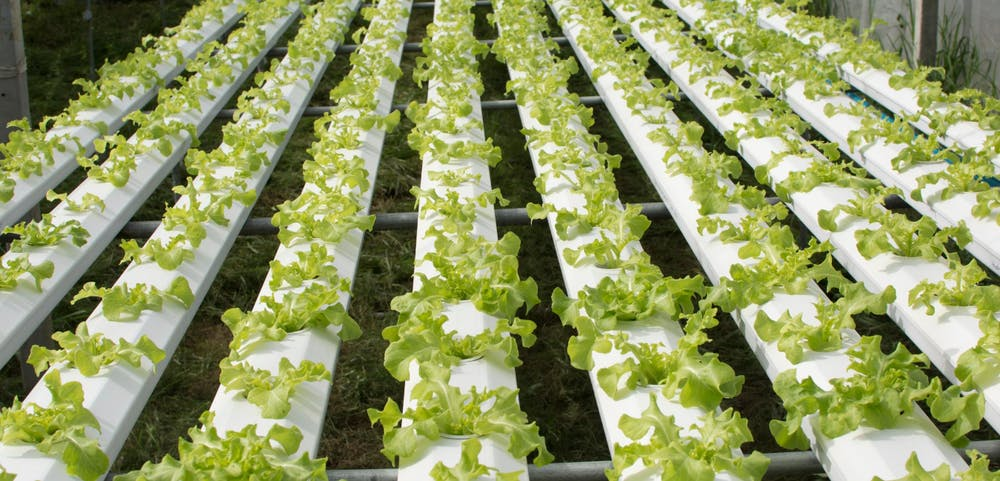 hydroponic farm tour