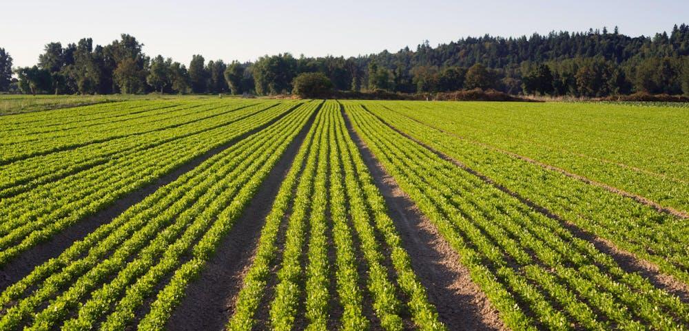 organic herbs farm tour