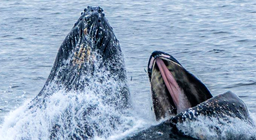 baleen vs toothed whales sea goddess whale watching