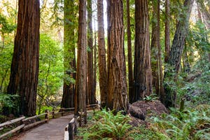 Private Tours of Napa Valley, Sonoma, and San Francisco