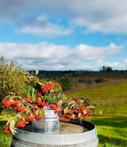 Sonoma Cabernet Vine
