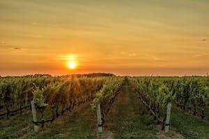 a sunset over a vineyard