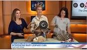 CBS News Video