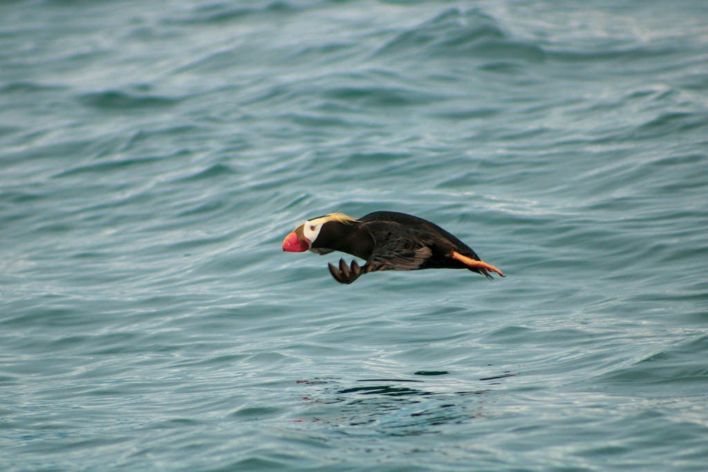 a bird swimming in water next to the ocean