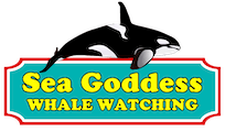 Sea Goddess Whale Watch Update