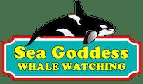 Sea Goddess Whale Watch Update