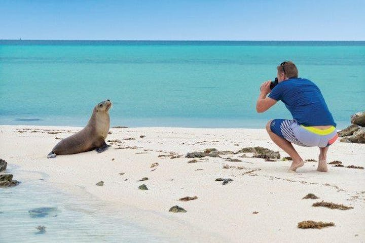 Guy taking a photo of a seal in the beach