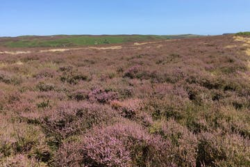 The Breamish Valley heather