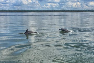 Two dolphins playing in the water