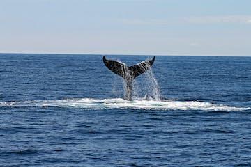 whale tail breaking through ocean surface