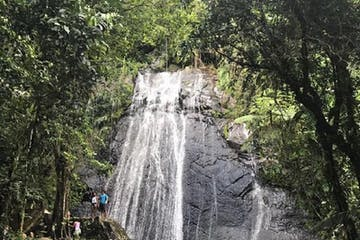 Yunque Rainforest
