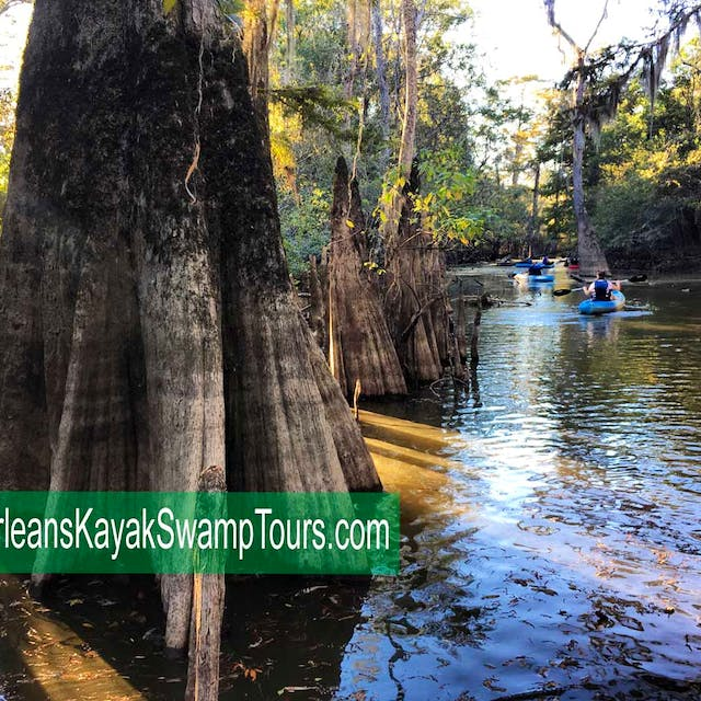 cypress swamp kayak tour
