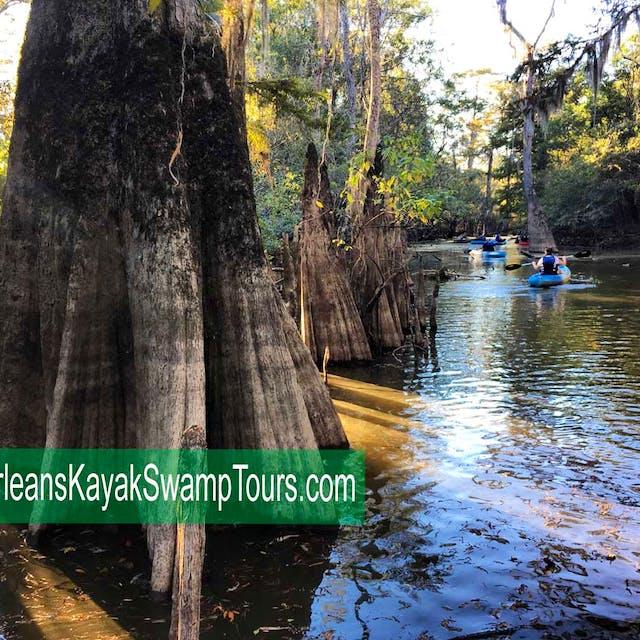 cypress swamp kayak tour