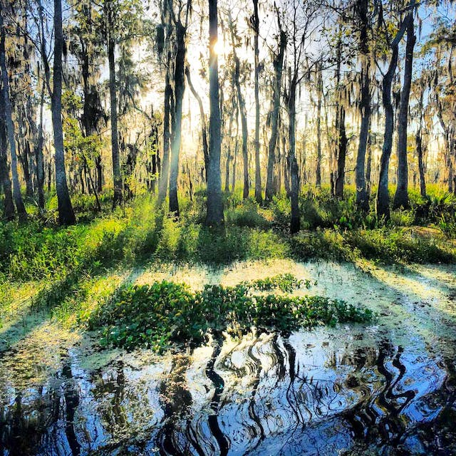 swamp louisiana
