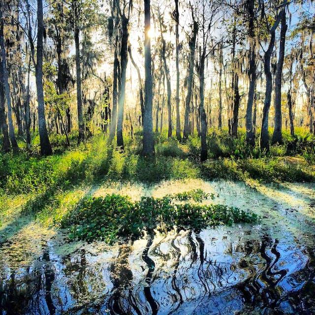 swamp louisiana