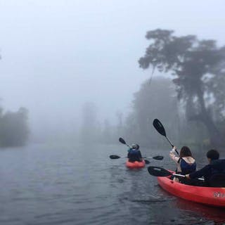 foggy swamp tour in new orleans