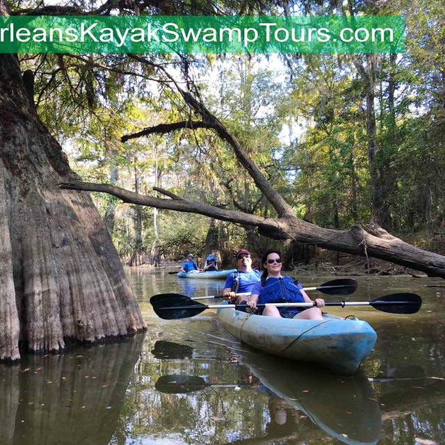 cypress swamp in New Orleans Louisiana