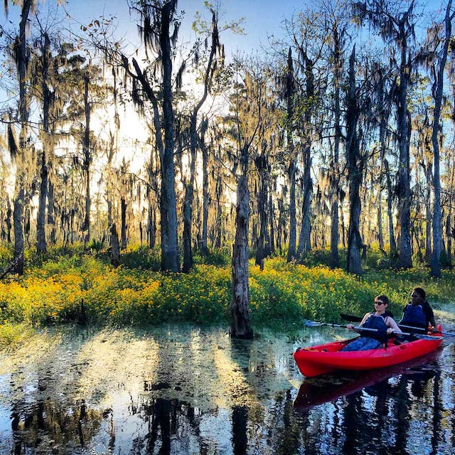 kayak tour in new orleans louisiana