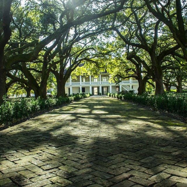 Live oak trees on plantation tour