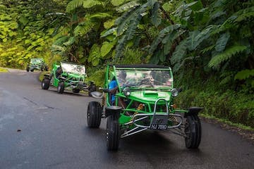 buggies through forest