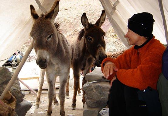 Making friends with donkeys in Ladakh