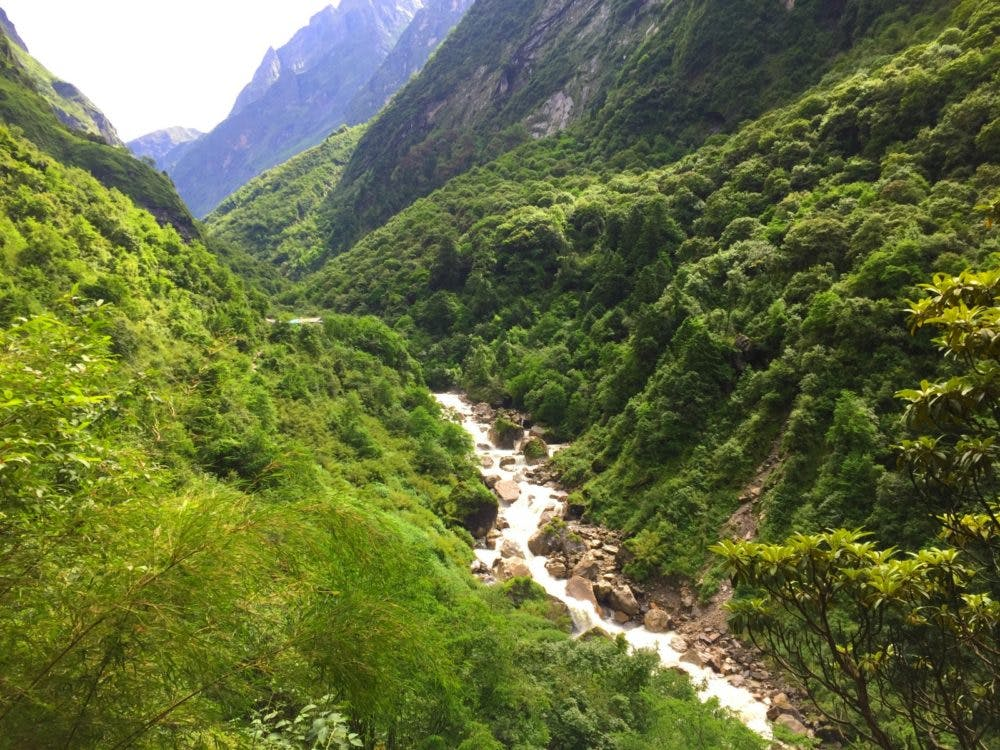 Lush green forest during the monsoon in Nepal