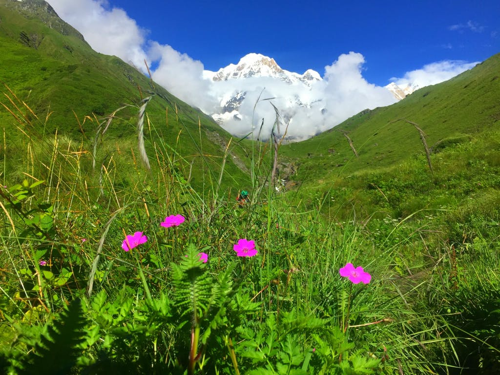 Flowers in bloom during the monsoon in Nepal
