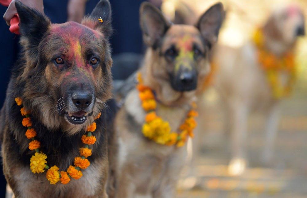 kukur tihar festival of dogs in nepal