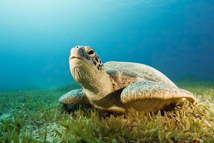sea turtle chilling on ocean floor