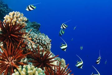 scuba dive reef