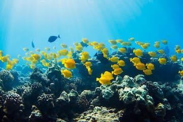 reef water