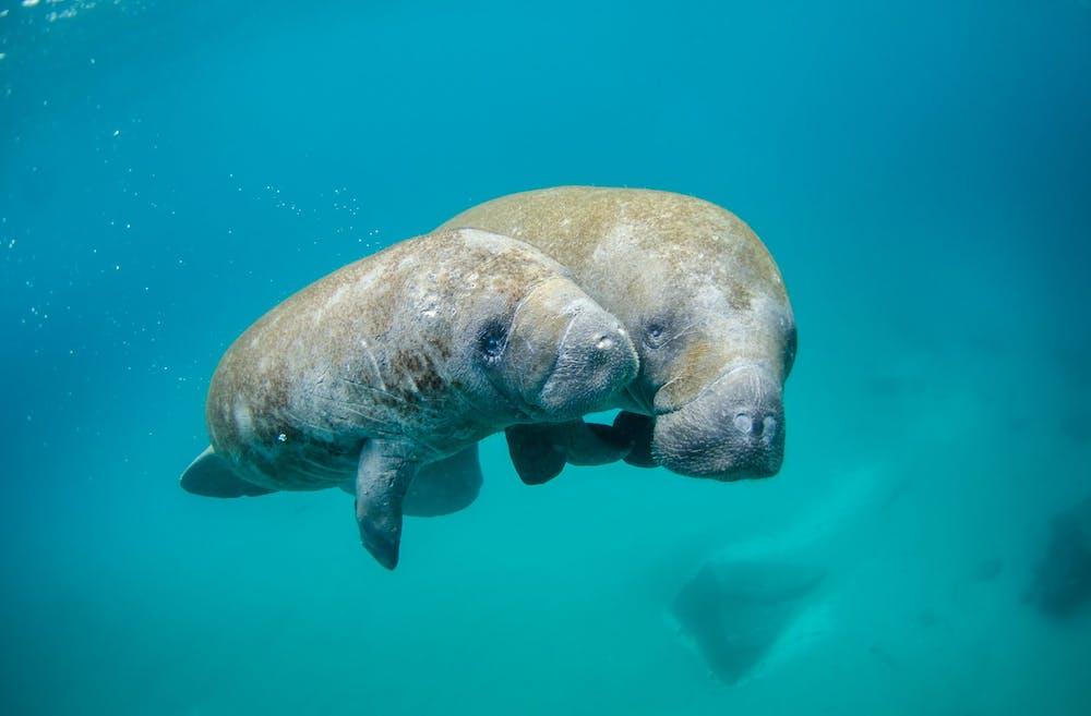 a polar bear swimming in a pool of water