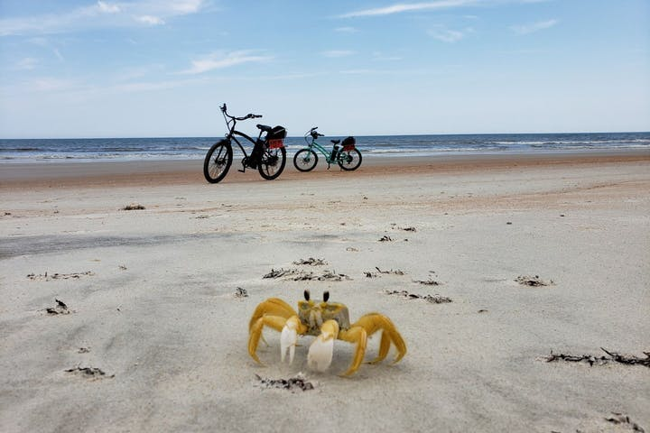 Yellow crab and Bikes on the beach