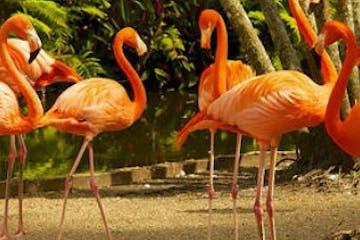 Botanical Gardens and Wildlife Sanctuary