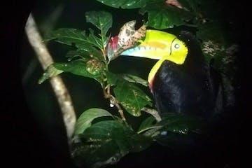 a Toucan at El Bosque Night Tour