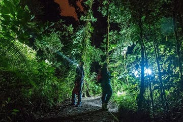 People discovering the forest with flashlights at El Bosque Night Tour