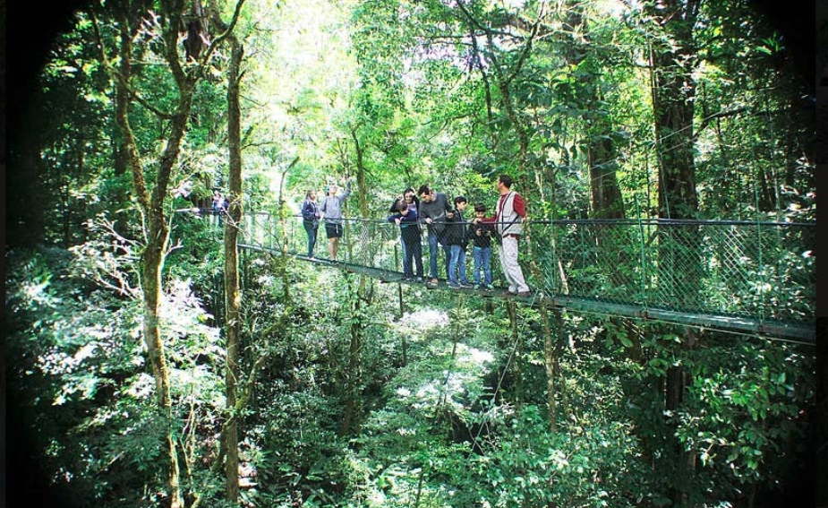 a group of people in a forest