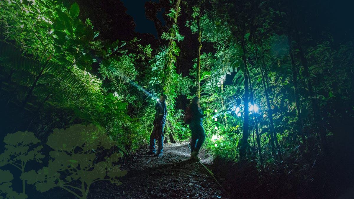 Personas realizando el tour de caminata nocturna (Monteverde Night Tour)
