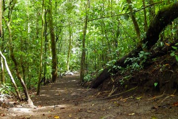 A trail in the forest in Monteverde Costa Rica