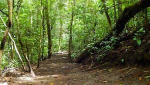 Sendero de El Bosque (conocido como El Bosque Trails) en Monteverde Costa Rica