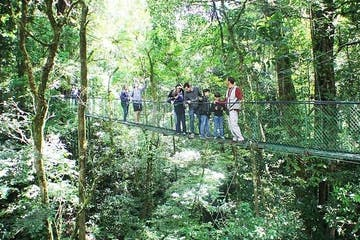 a group of people in a forest on a hanging bridge