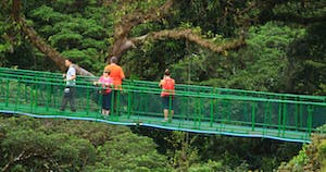 a group of people on a hanging bridge near a forest