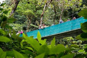 a close up of a lush green forest and tourists on a hanging bridge