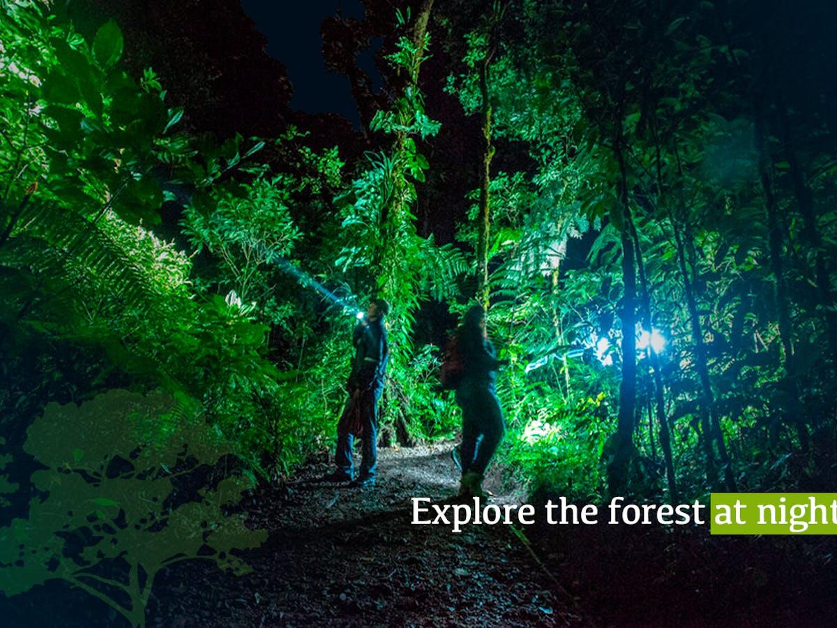 El Bosque Night Tour Monteverde