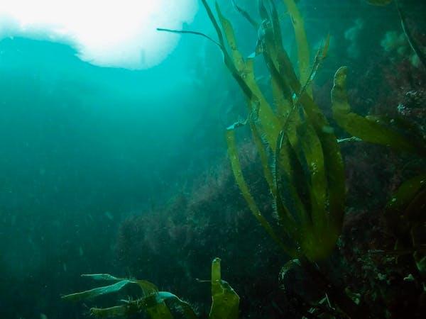 a green underwater