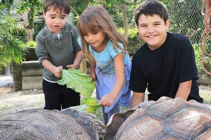 kids touching tortoise