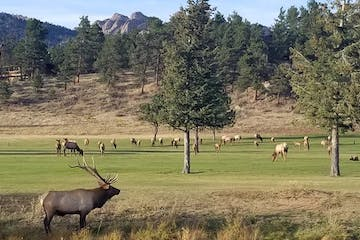 elk in the lower valley tour