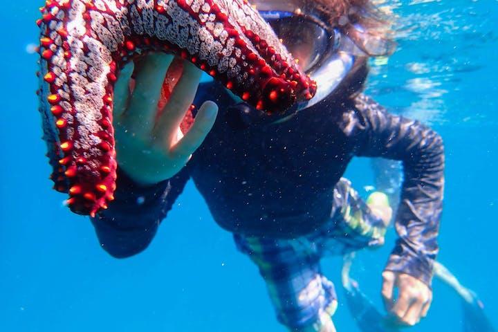snorkeler with starfish