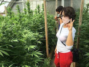 woman throws up peace sign in a cannabis greenhouse as a man takes pics of the plants behind her