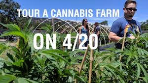 cannasseurs explore cannabis farm